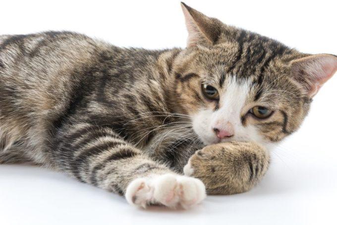 cat-1-680x453.jpg