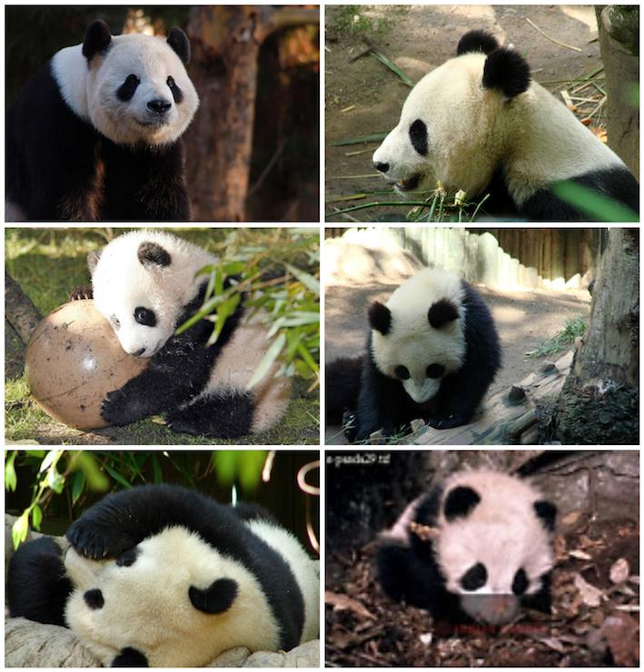 panda-domain.jpeg