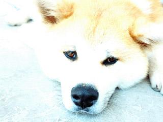 dog_screen.jpg