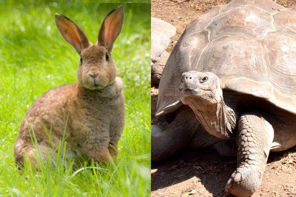 ウサギとカメ.jpg