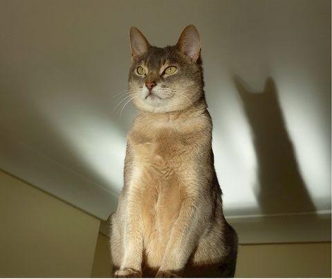 サイズ修正猫画像
