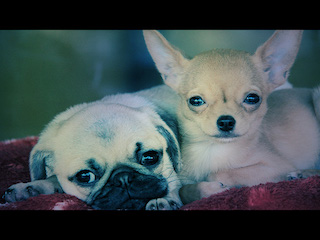 2dogs2.jpg