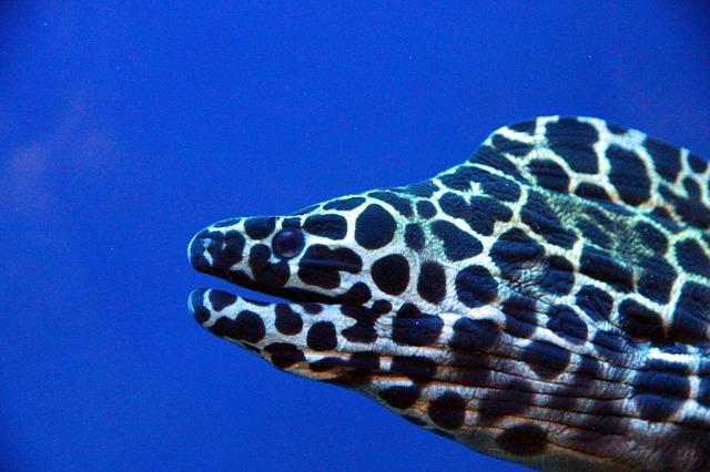 honeycomb-moray-1877047_640.jpg