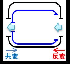 18_共変・反変.png