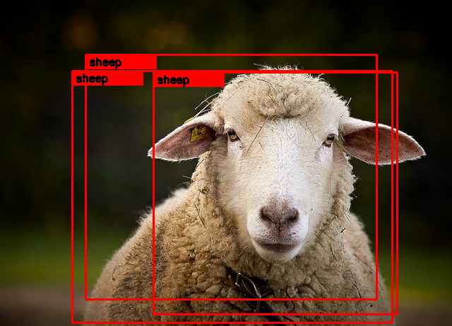 sheep_marked.png