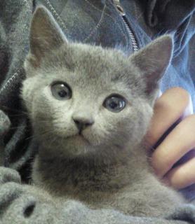 s_kitten_blue.jpg