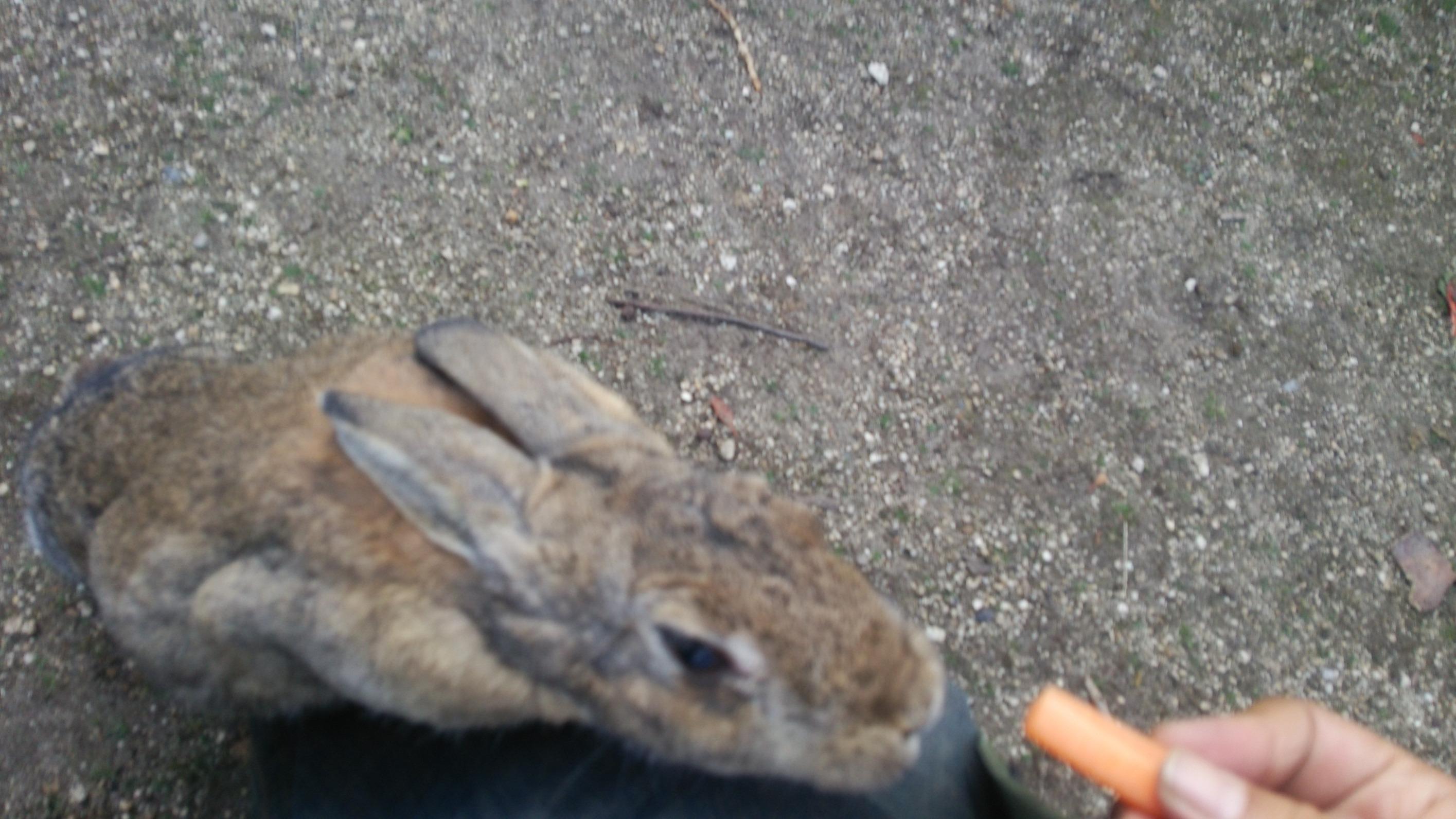 ウサギさんの写真